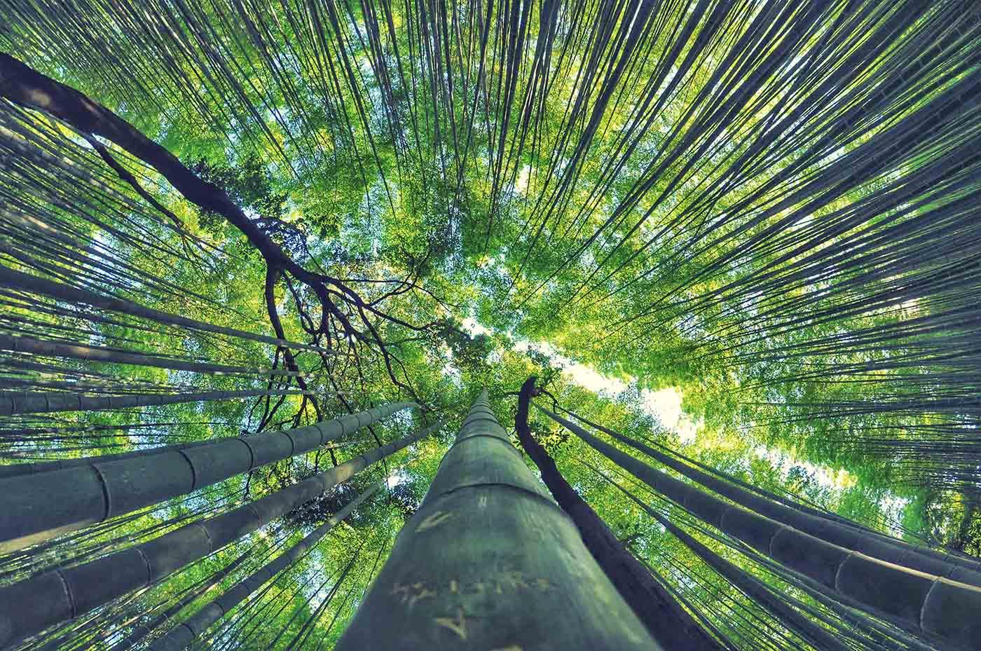bamboo flute raag